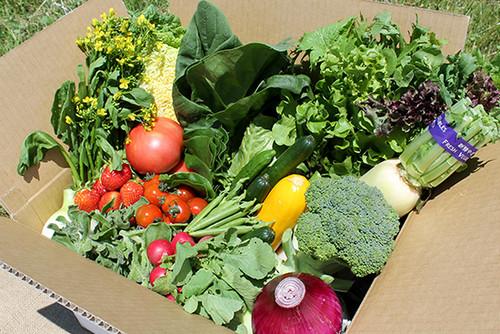 雫石の農家さんが育てた新鮮な野菜がたっぷり入った松の実の旬彩BOX
